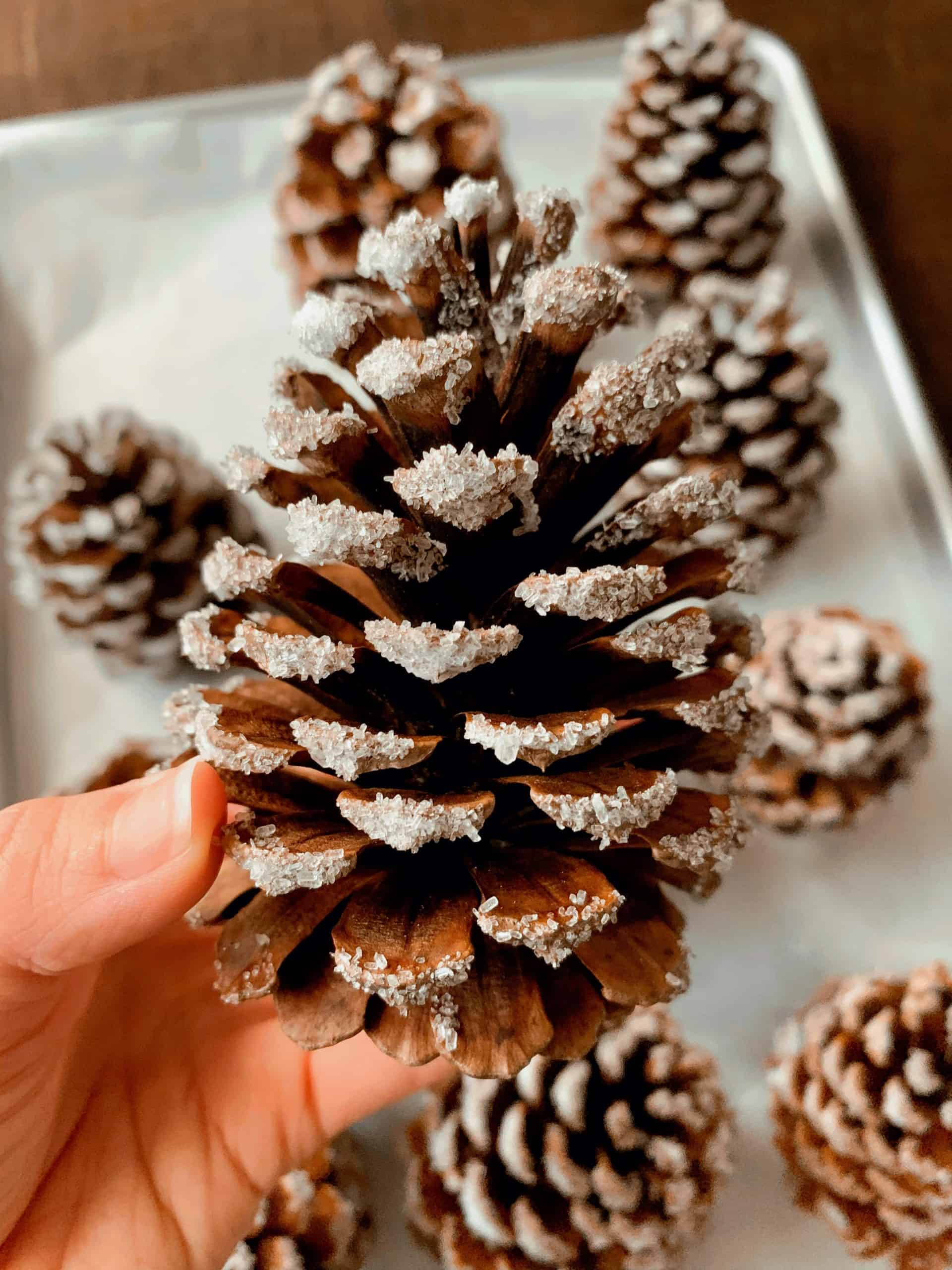 Wondering how to make snow covered pinecones or flocked pinecones for Christmas? Check out my Easiest DIY Snow Covered Pinecones tutorial using Epsom salt, Mod Podge glue, and pinecones. This DIY pinecone Christmas craft is easy, affordable, and only takes 5 minutes! #pinecones #diy #christmascraft